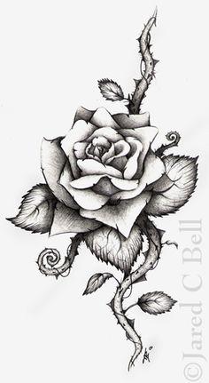 236x431 Drawn Rose Blood Drawing