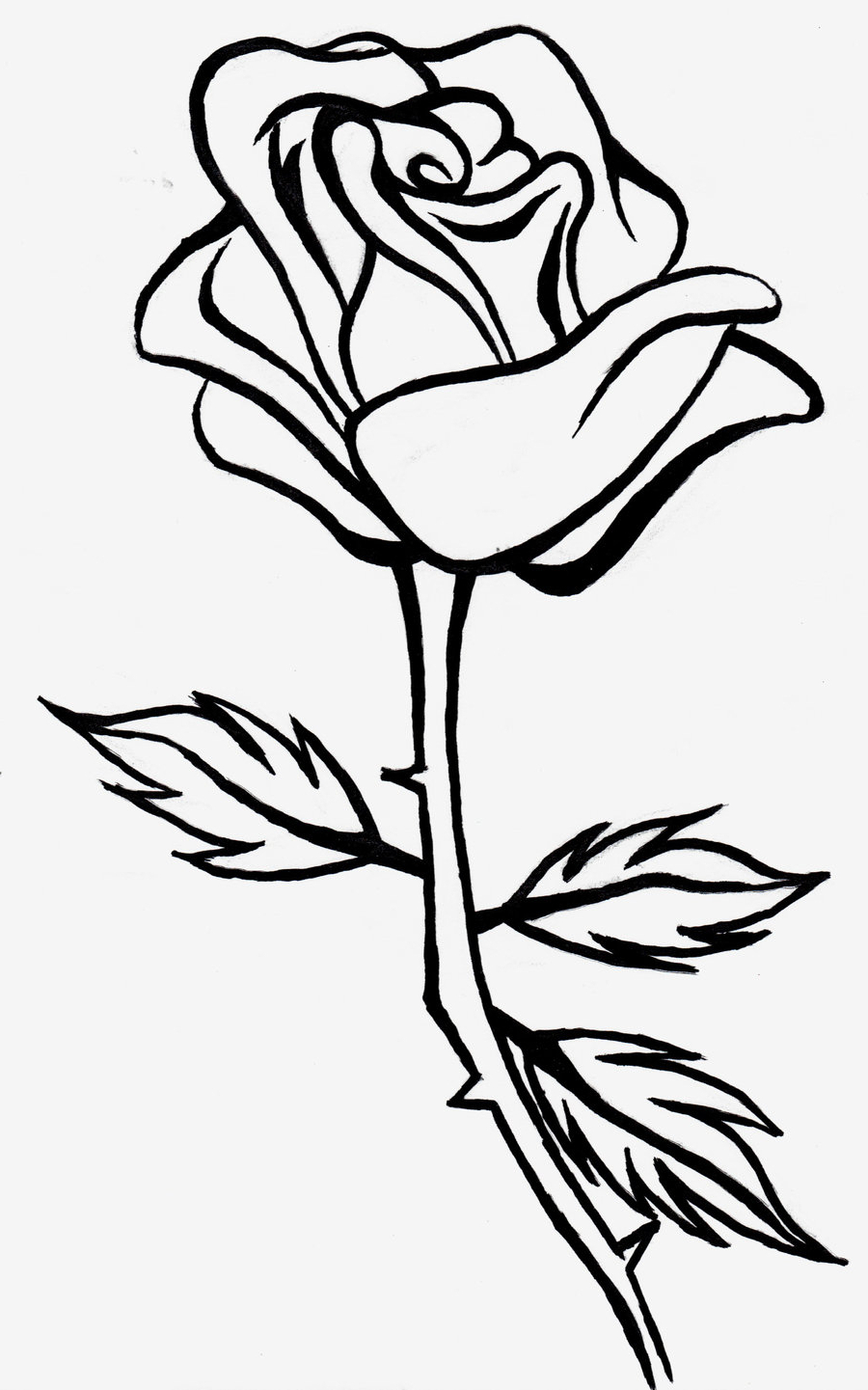 900x1441 Full Hd Rose Line Drawing Photo 3d Best Flower Line Drawings