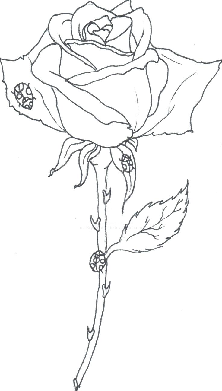 736x1296 On Realistic Rose Drawing Outline