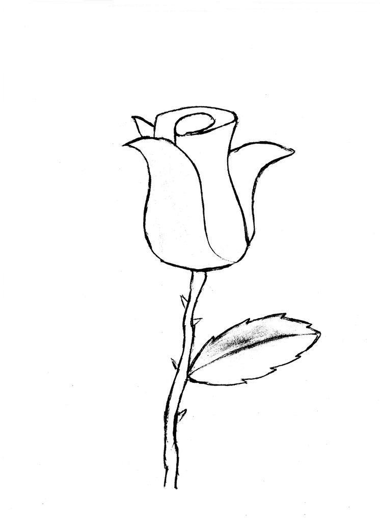 746x1024 Rose Sketch By Modularsundays