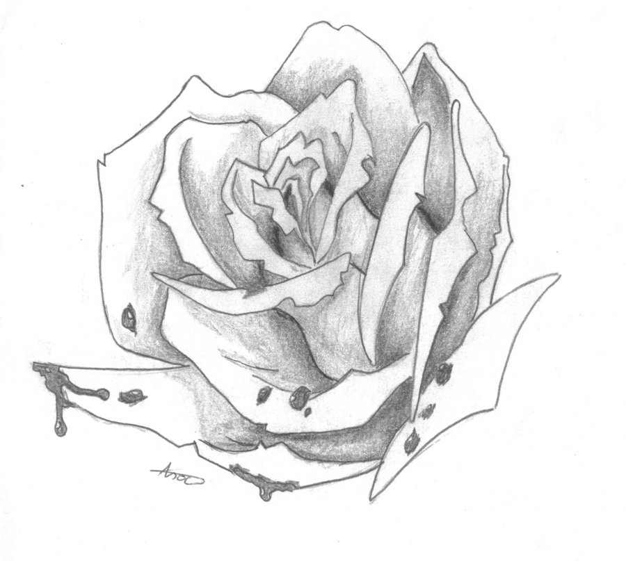 900x807 Bloody Rose Drawing By Elvishshadowarcher