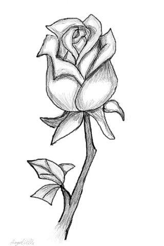 320x480 Drawn Rose