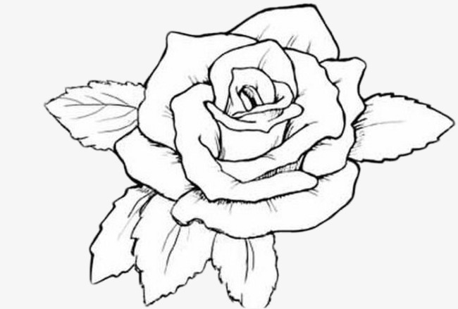 650x439 Hand Drawn Roses, Brief Strokes, Basket Flower, Simple Pen Basket