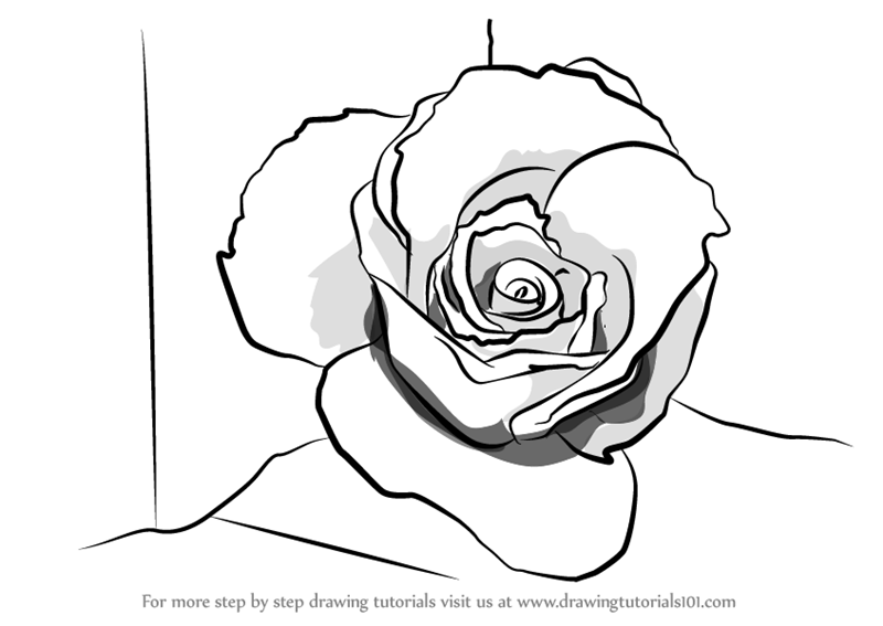 800x567 Learn How To Draw A Rose Closeup (Rose) Step By Step Drawing