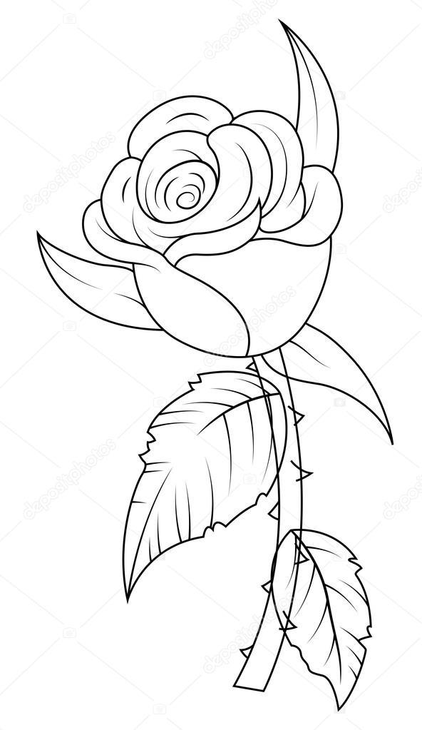 592x1023 Rose Drawing Stock Vector Baavli