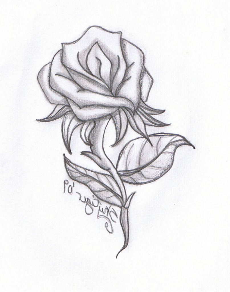 Rose In Pencil Drawing