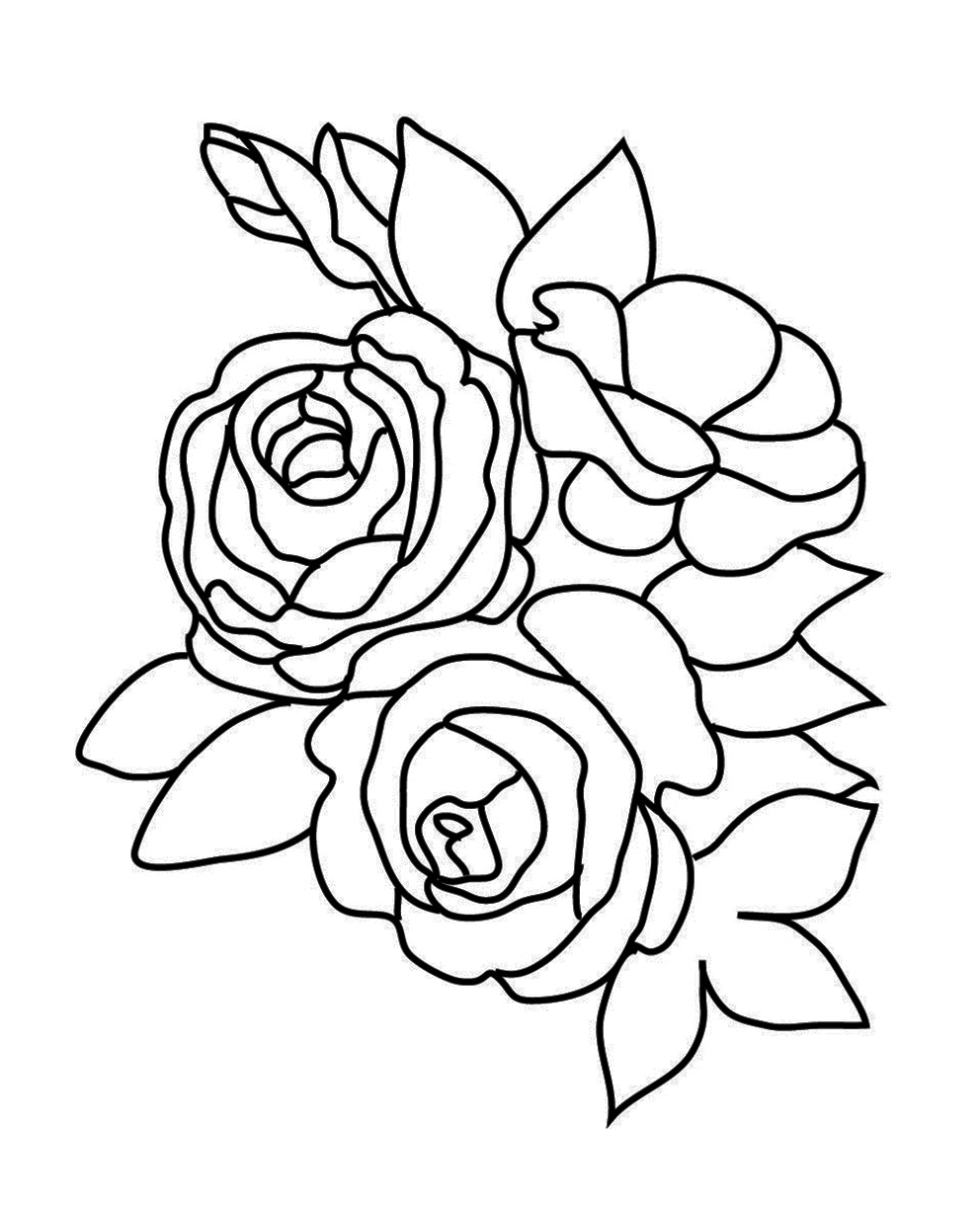 680x472 drawn rose bush leaf 992x1226 flower coloring pages