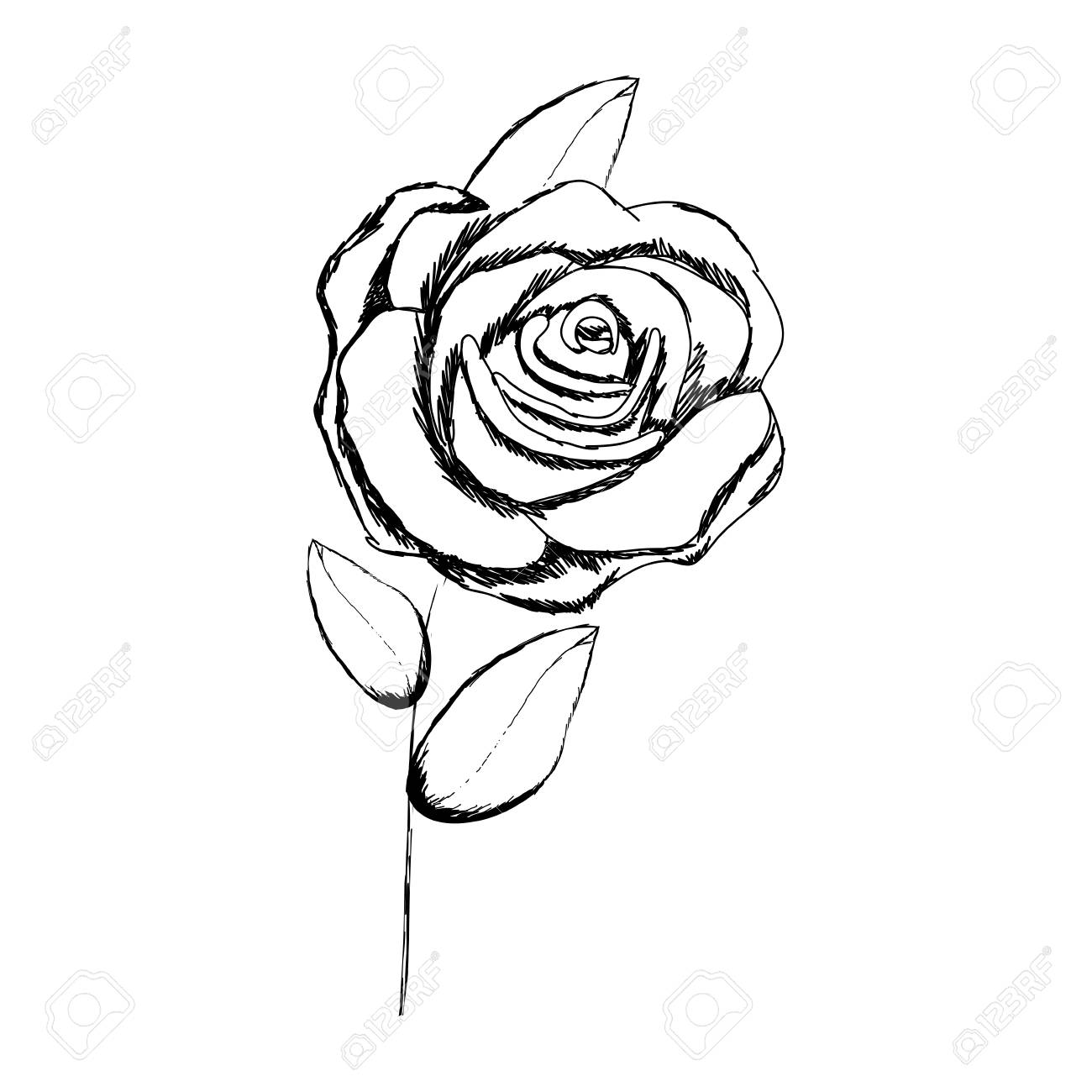 1300x1300 A Monochrome Sketch With Stem Of Rose With Flower And Leaves