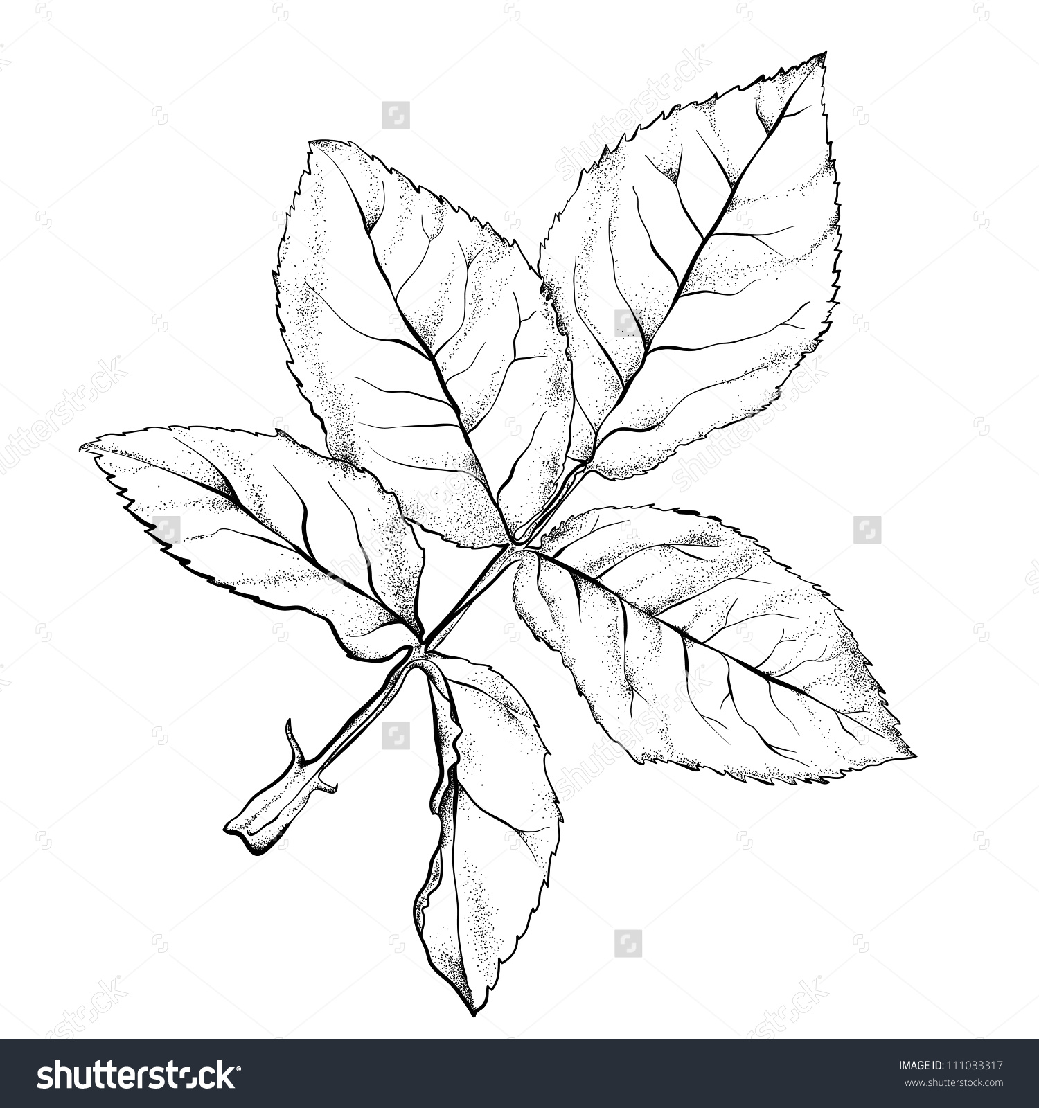 1500x1600 Printable Rose Leaf Drawing