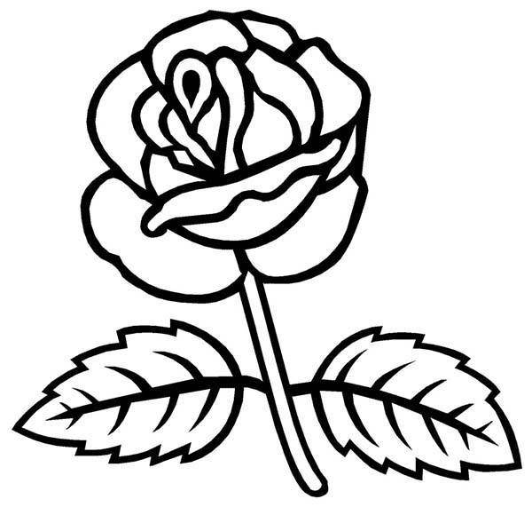 600x571 Rose With Two Leaves Coloring Page