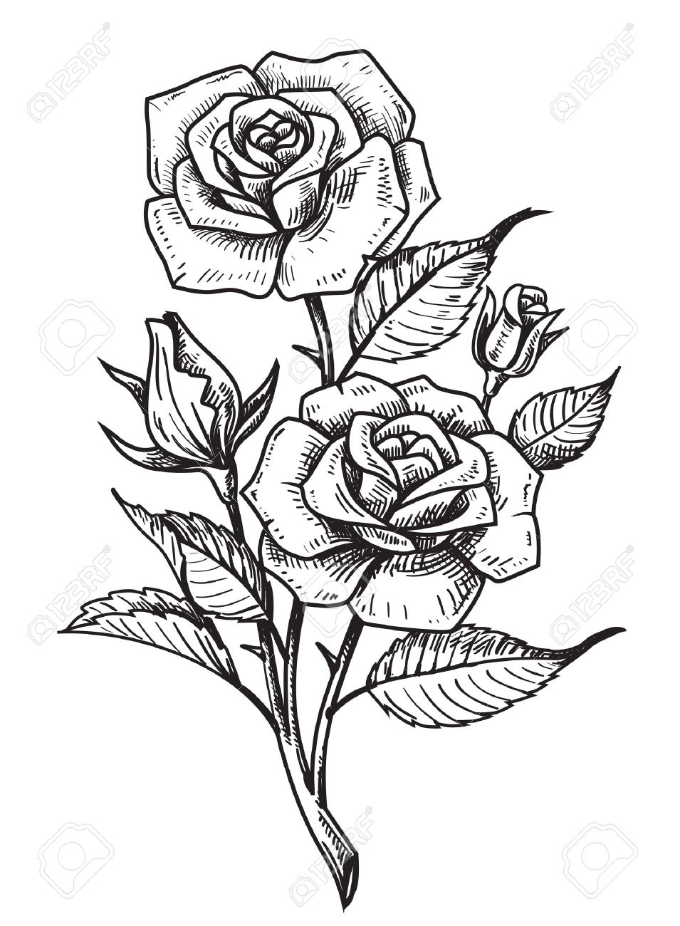 955x1300 Vector Tattoo Roses With Leaves On White Background Royalty Free