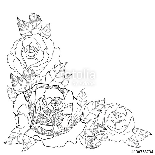 500x500 Vector Illustration With Outline Rose Flower And Foliage Isolated