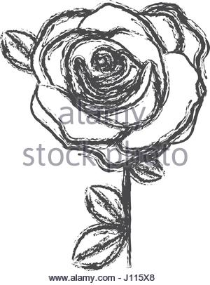 300x406 Blurred Silhouette Sketch Flowered Rose With Leaves Closeup Stock