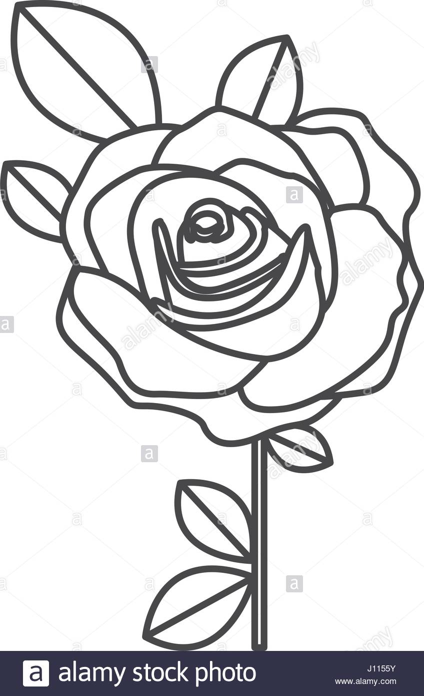 848x1390 Silhouette Sketch Flowered Rose With Leaves And Stem Stock Vector