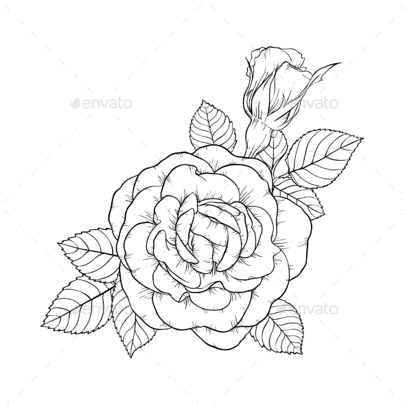 590x590 Black And White Rose And Leaves By Hulinska Yevheniia Graphicriver