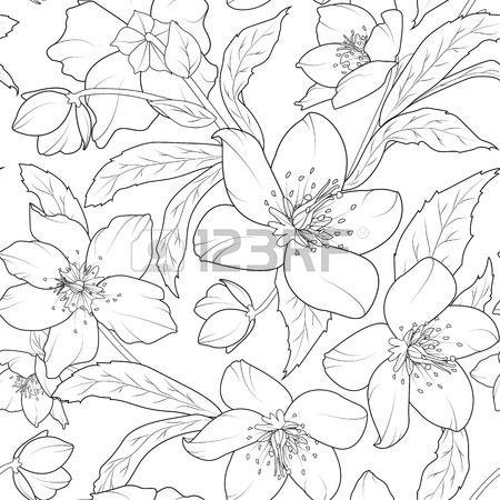 450x450 Christmas Winter Rose Hellebore Flowers Seamless Pattern. Lenten
