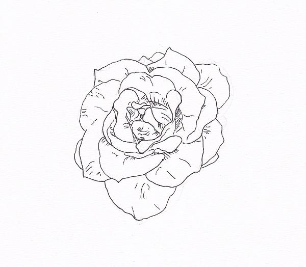 600x524 Draw A Rose With Fiber Tip Pen Rose Outline