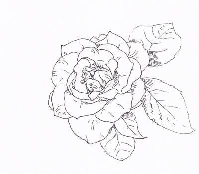 400x349 T{He Art} Draw A Rose With Fiber Tip Pen