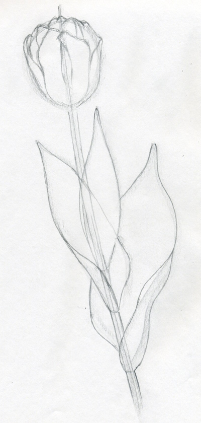 400x840 draw tulip flowers in few easy steps