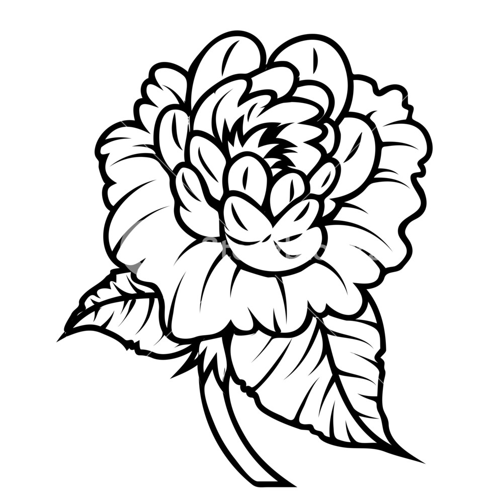 1000x1000 Rose Drawing Royalty Free Stock Image