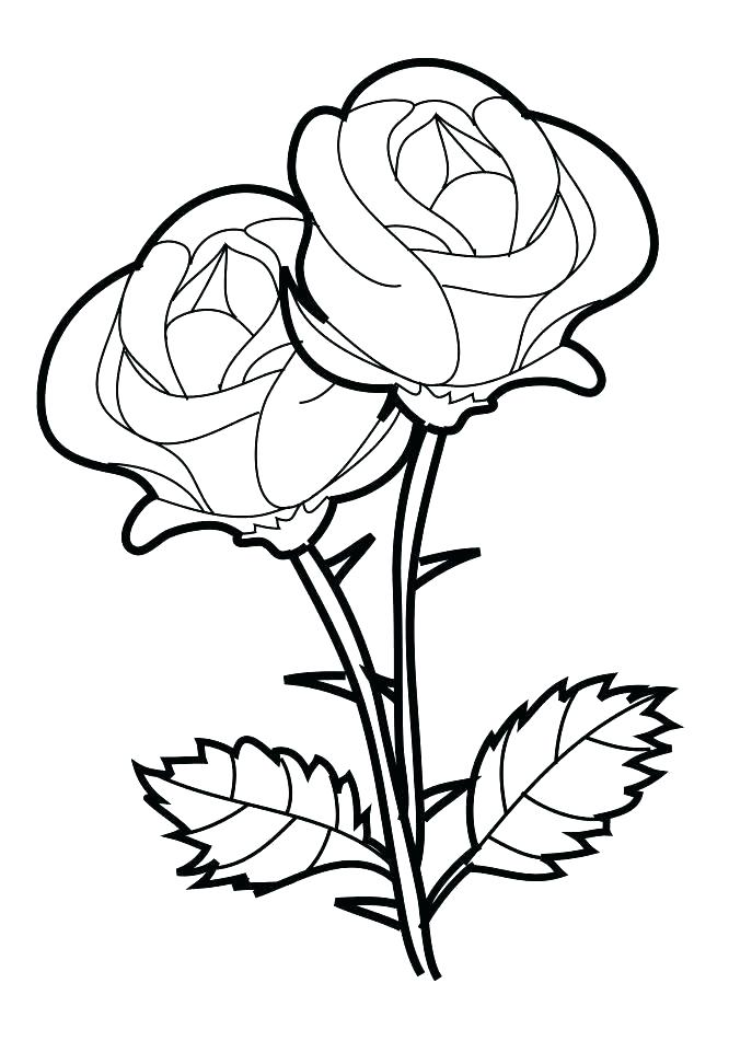 687x972 Rose Flower Coloring Pages Rose Flower Coloring Pages Rose Petals