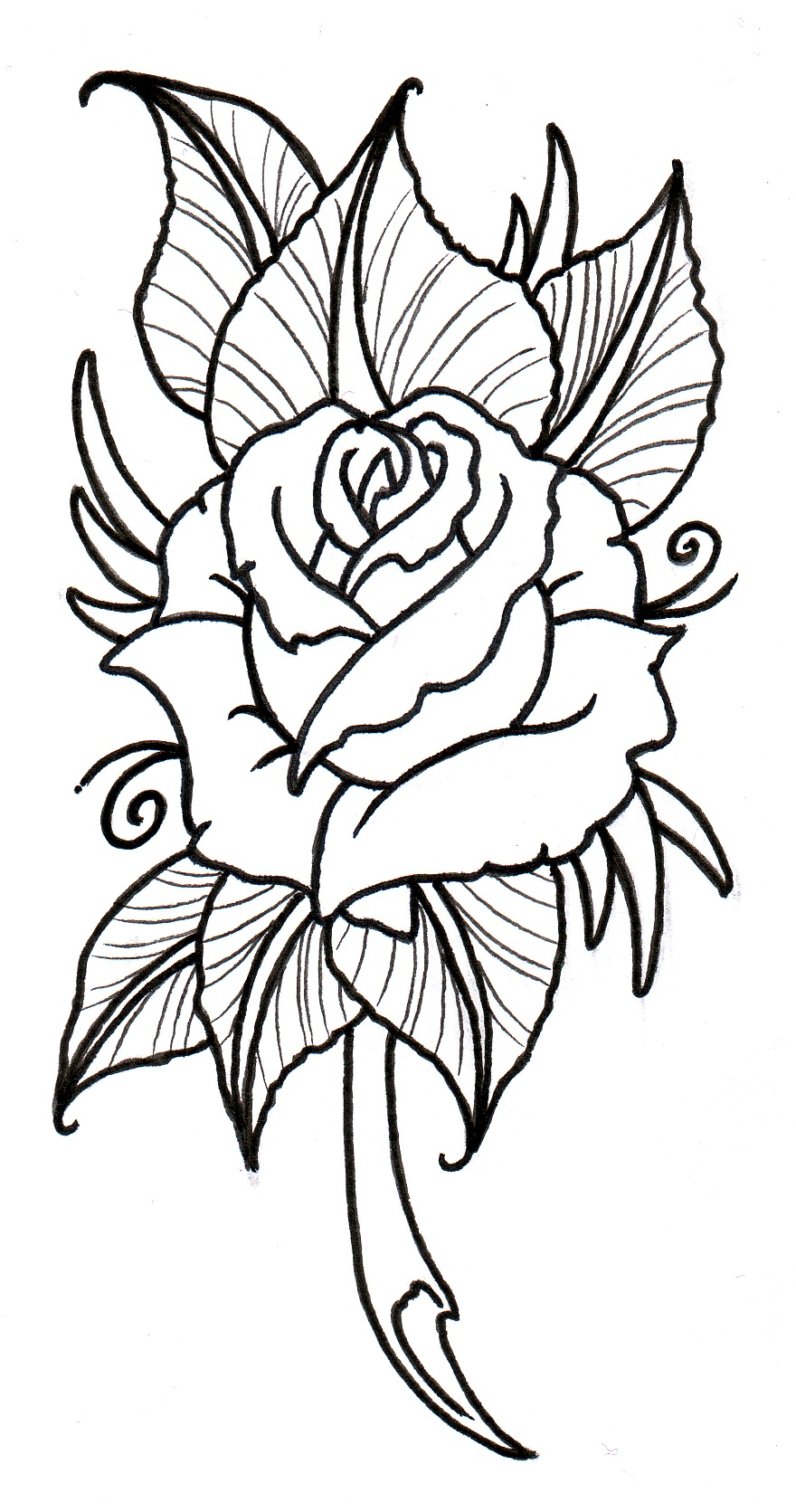 880x1671 Rose Flower Outline Drawing Neo Traditional Rose Outline By