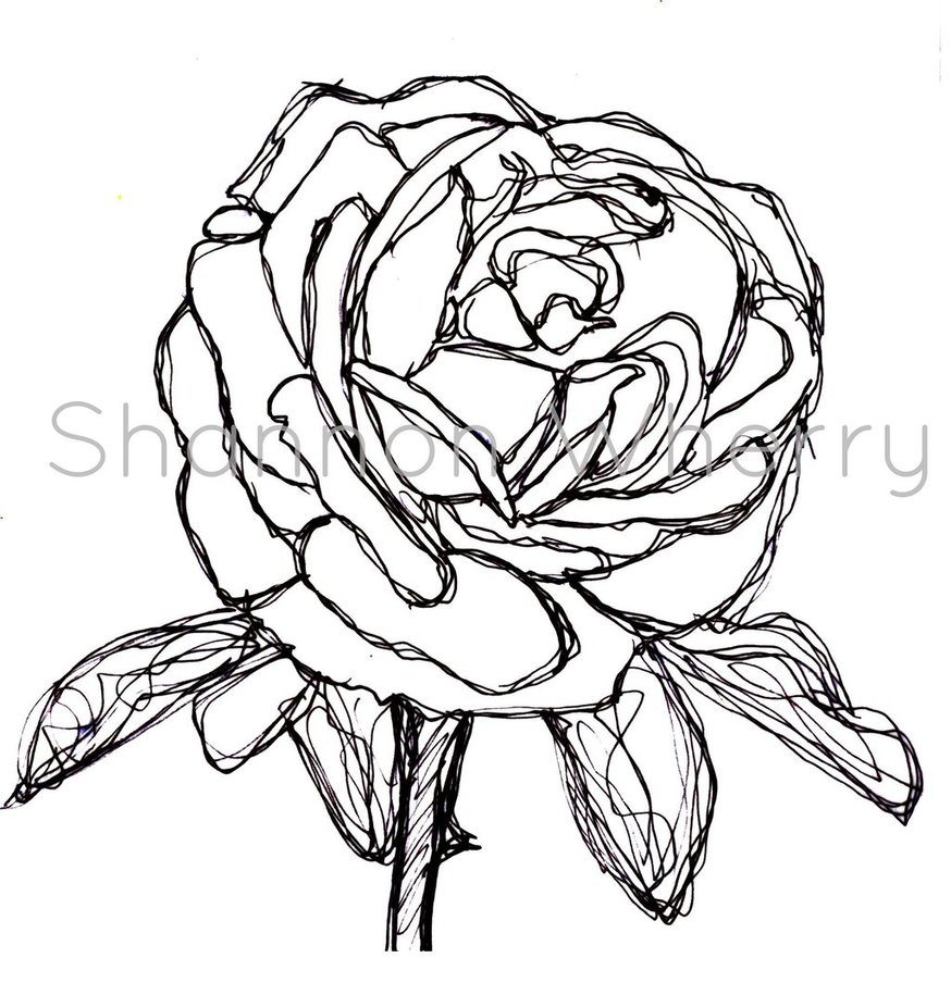 874x915 Rose Drawn By Continuous Line By Shanwherry