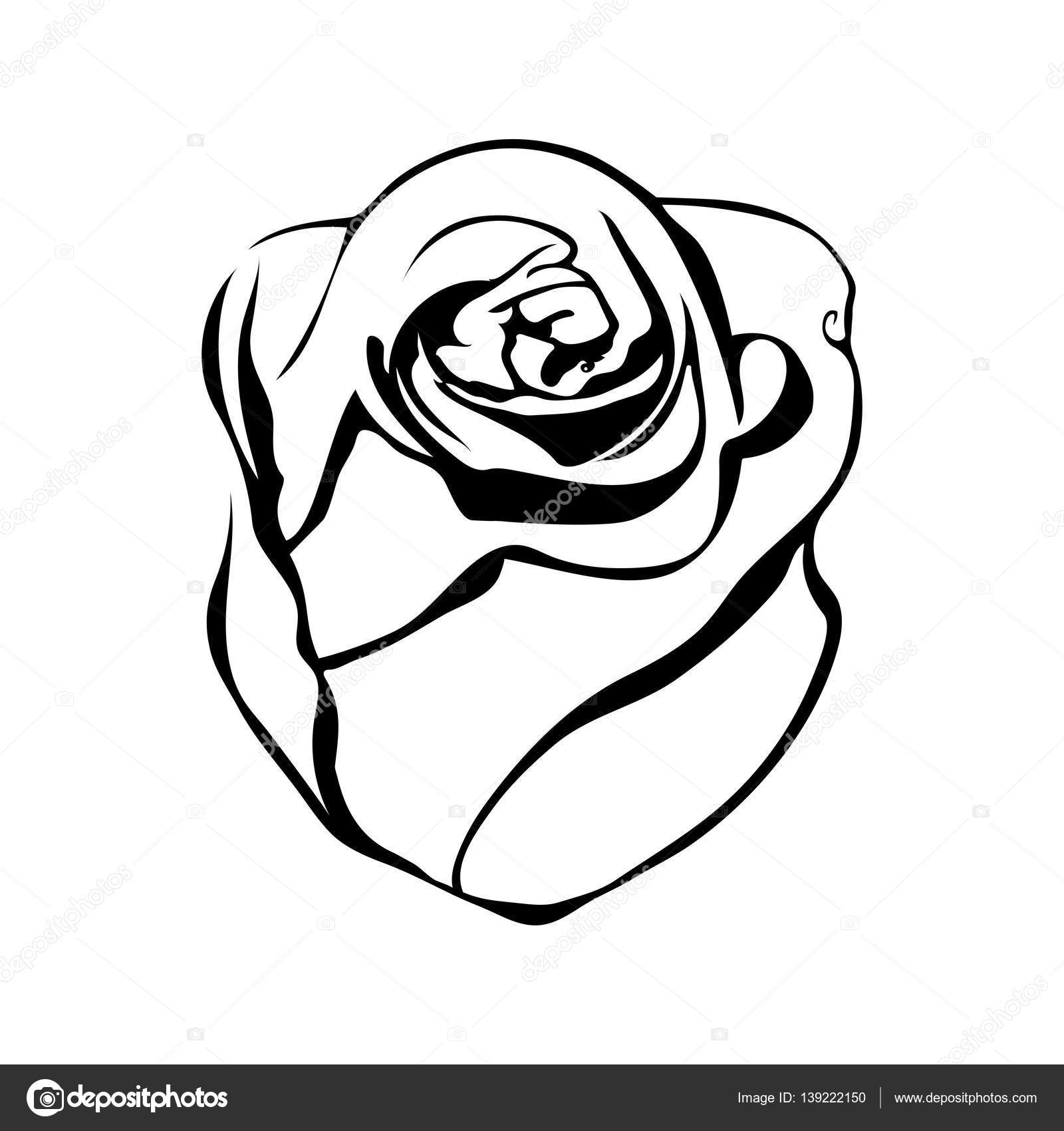 1600x1700 Sketch Line Drawing Of Rose Stock Vector Madozi