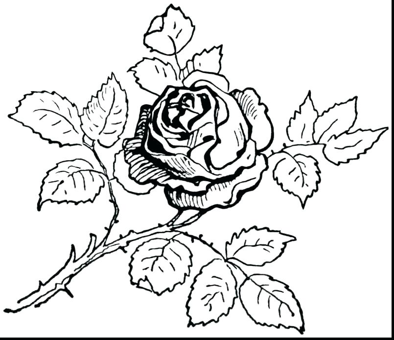 805x694 Rose Flower Coloring Pages Rose Flower Coloring Pages Rose Petals