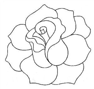 Rose Picture Drawing