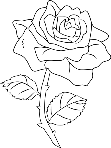 377x500 Flowers Rose Drawing Many Flowers