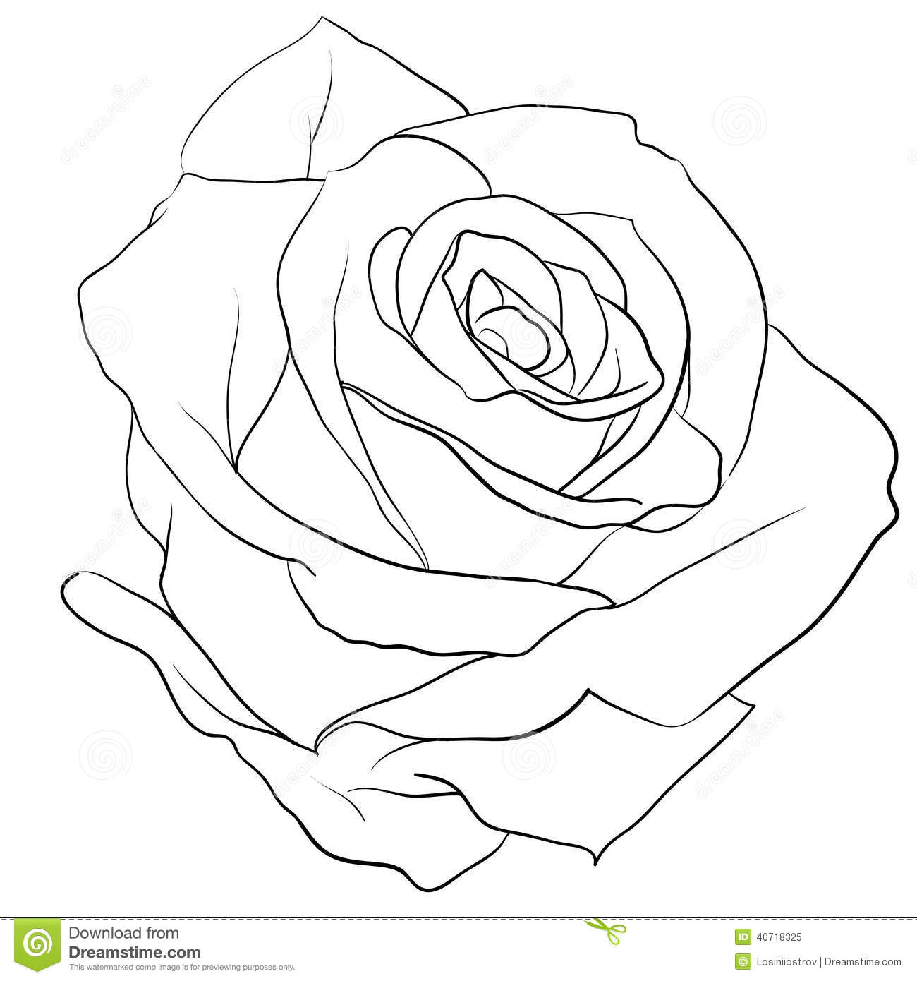 1300x1390 On Realistic Rose Drawing Outline