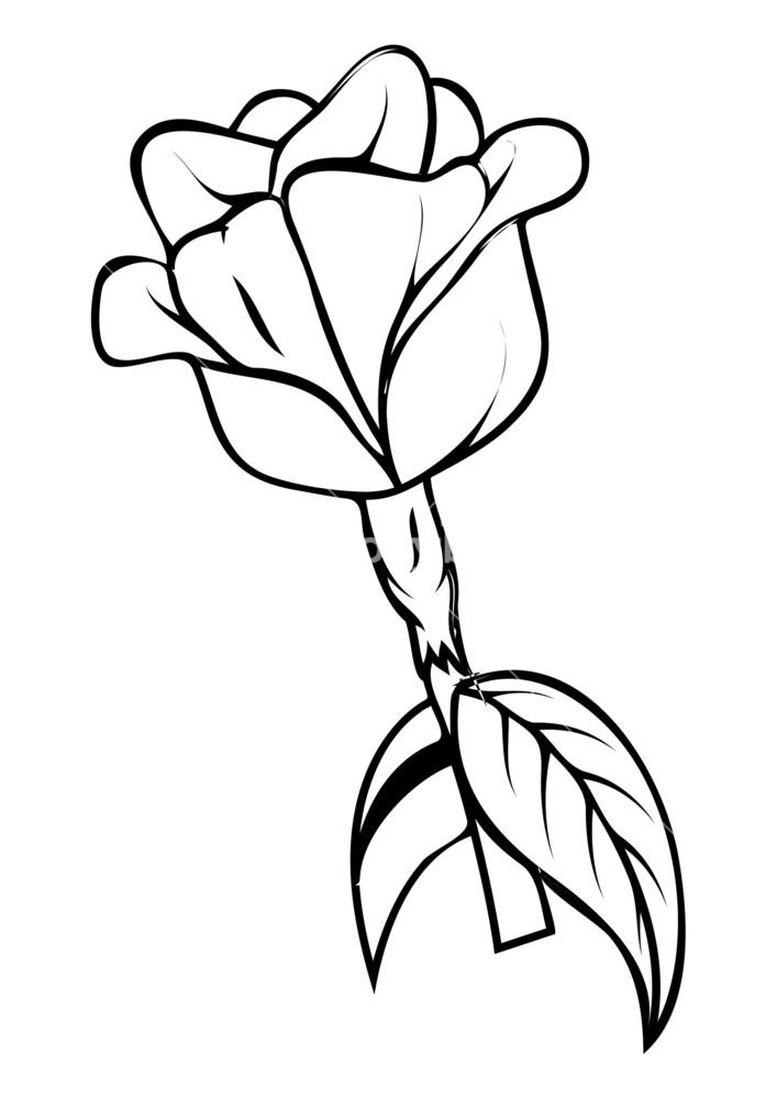 707x1000 Retro Rose Drawing Royalty Free Stock Image