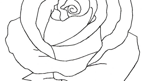 570x320 Rose Drawing Black And White Black And White Drawings Of Roses