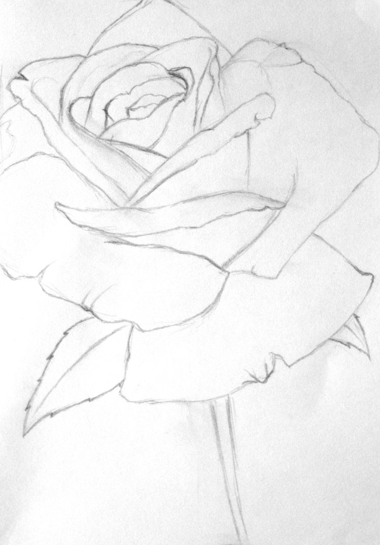 746x1070 Rose Line Drawing By Dragon Friend18