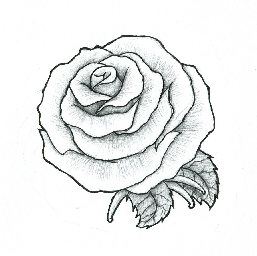 900x896 To Rose Drawing Tattoo
