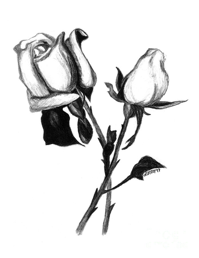 695x900 Two Roses Drawing By Leara Nicole Morris Clark