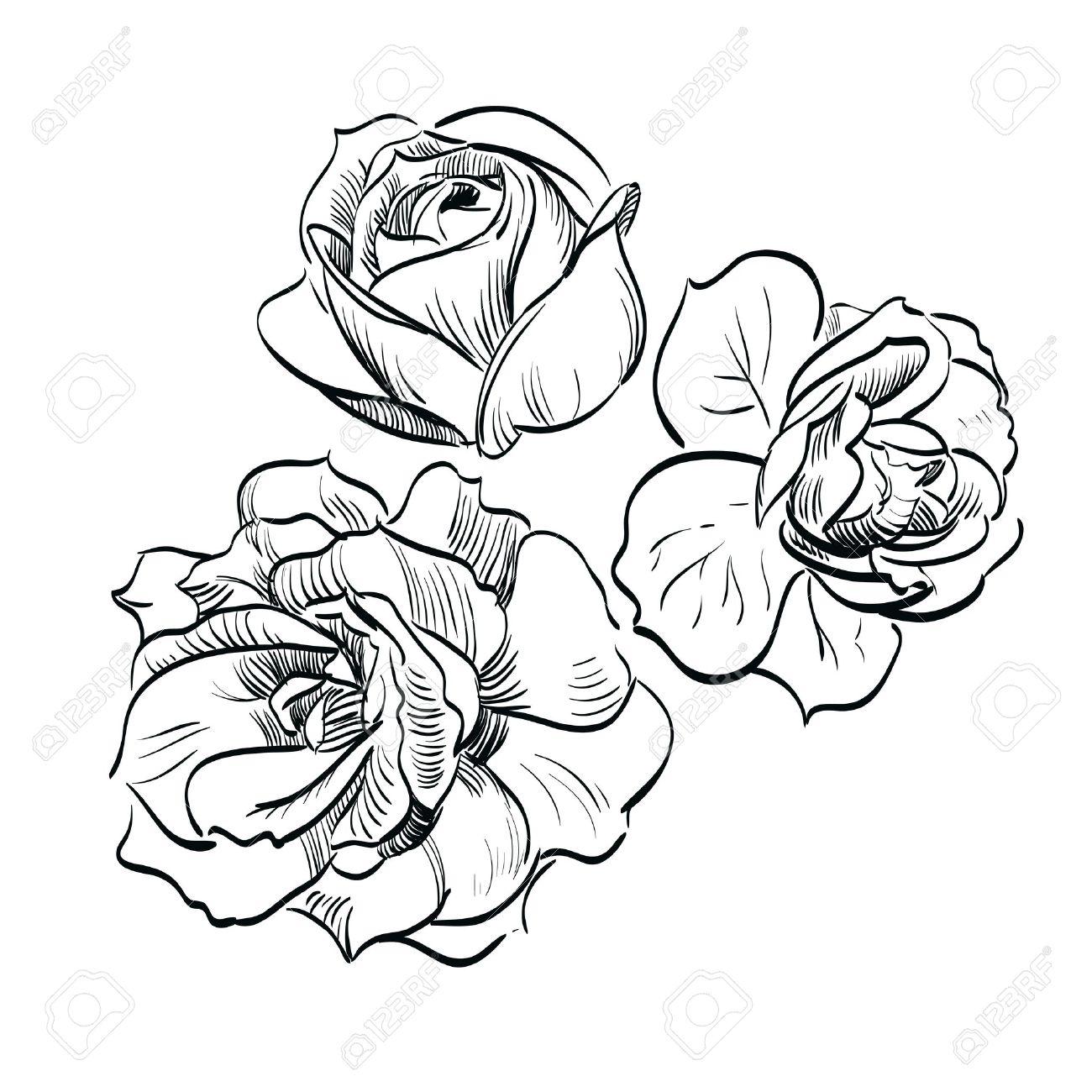 1300x1300 Dongetrabi Black Rose Drawing Images