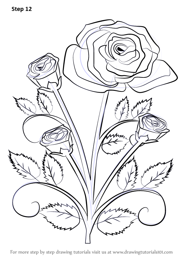 596x842 Learn How To Draw A Rose Plant (Rose) Step By Step Drawing Tutorials