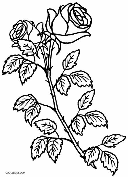 445x614 Printable Rose Coloring Pages For Kids Cool2bkids