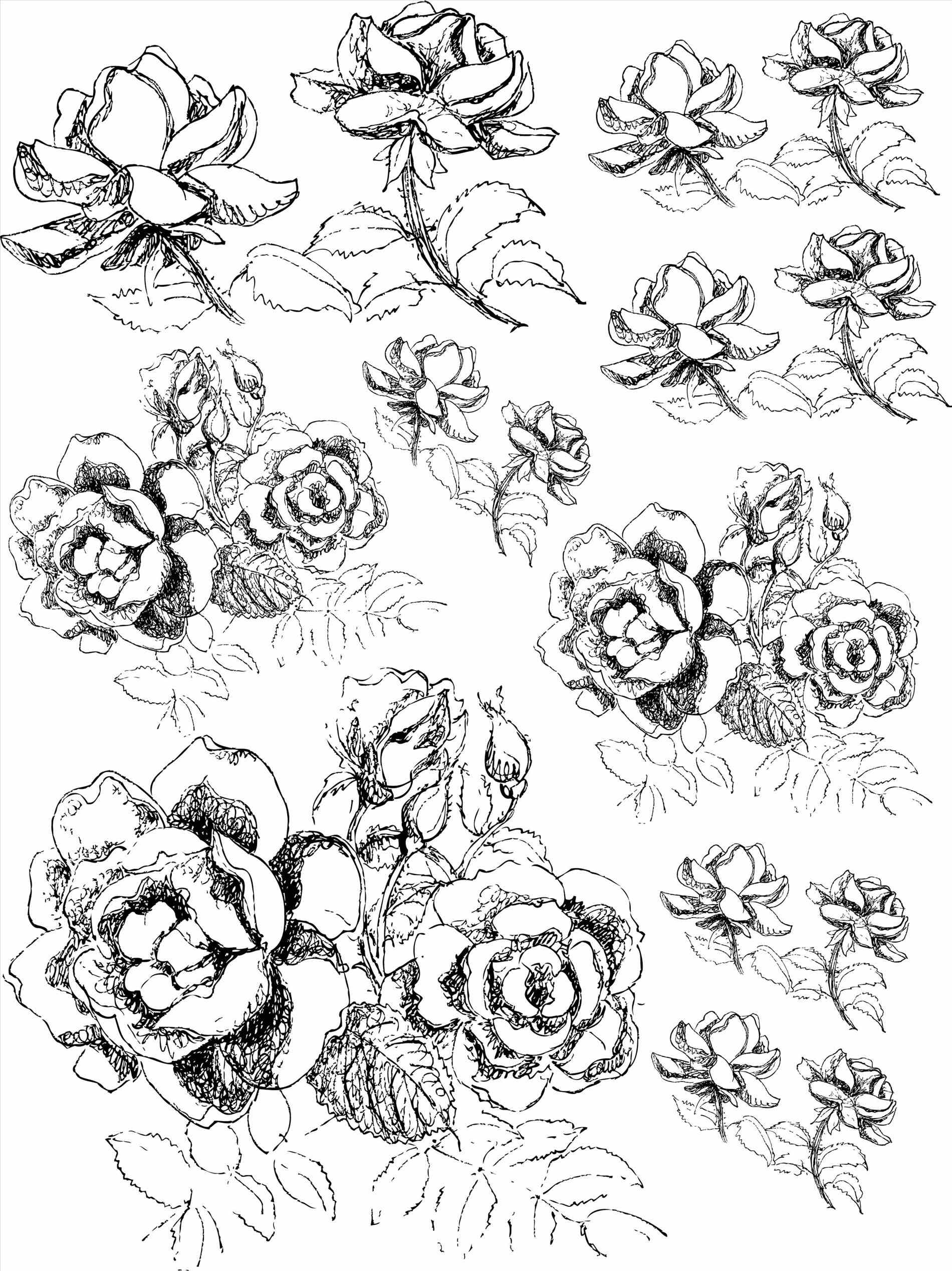 1900x2536 Rose Plant Drawing Darxxidecom