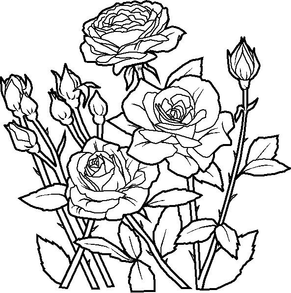 593x596 rose plants clipart black and white