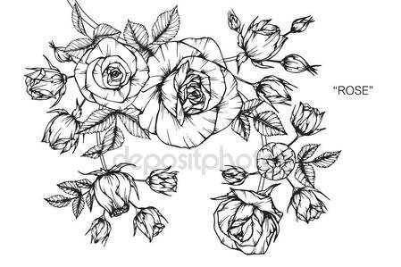 449x299 Roses Flower Drawing Sketch Black White Line Art Stock Vector