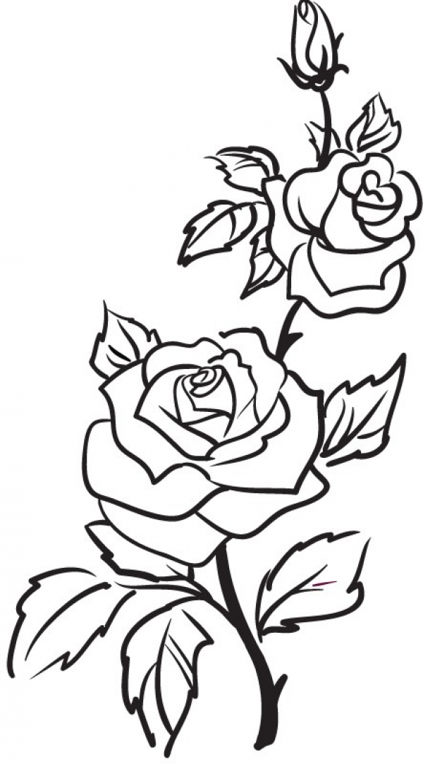 600x1083 Two Roses Clipart