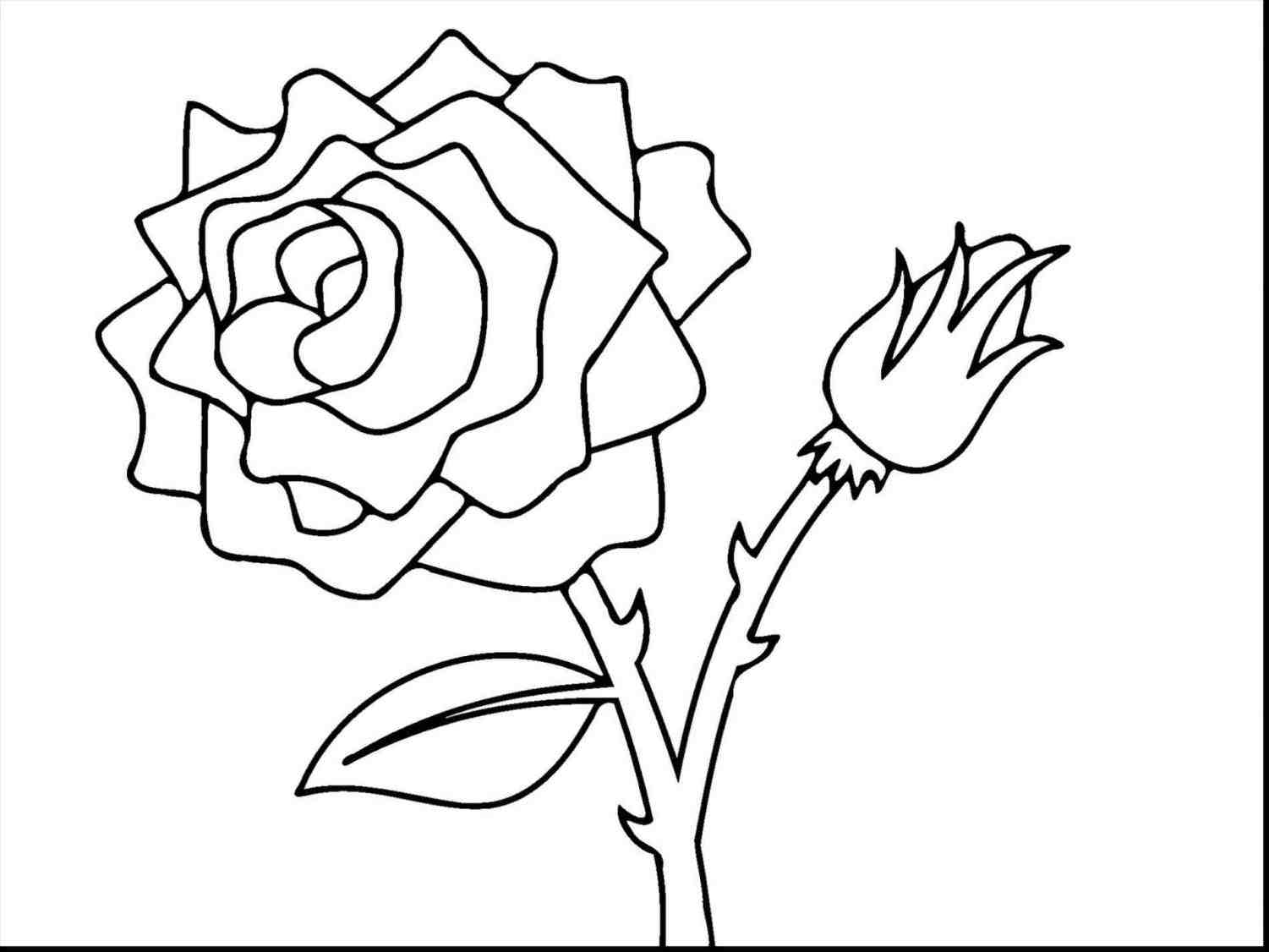 1501x1126 Rose Bush Drawing Easy