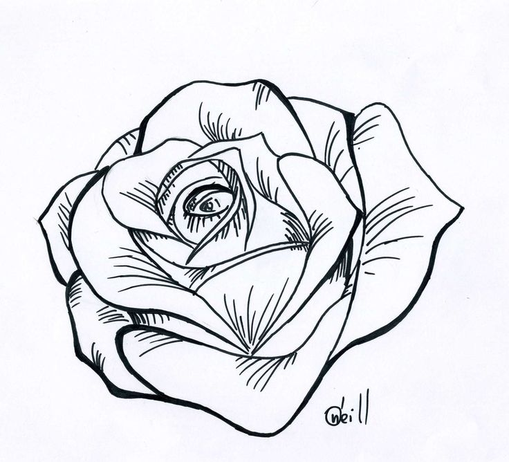 Rose Realistic Drawing