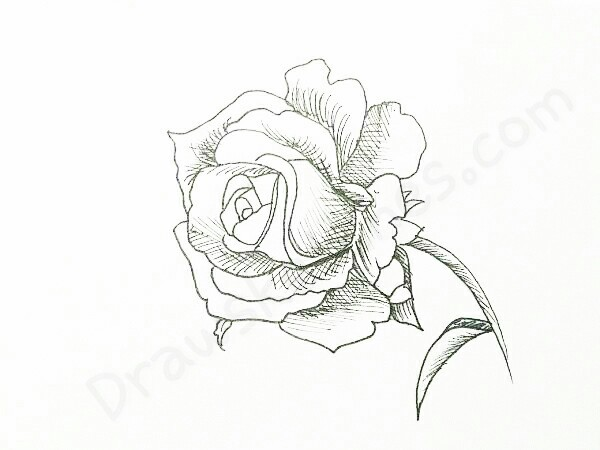 600x450 How Draw A Rose By Following 16 Easy Steps You Will Lead