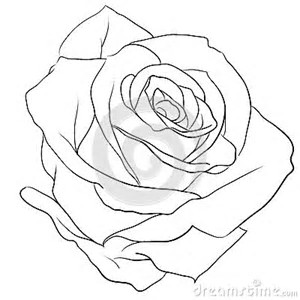 300x300 Image Result For Drawing A Realistic Rose Buds Flowers