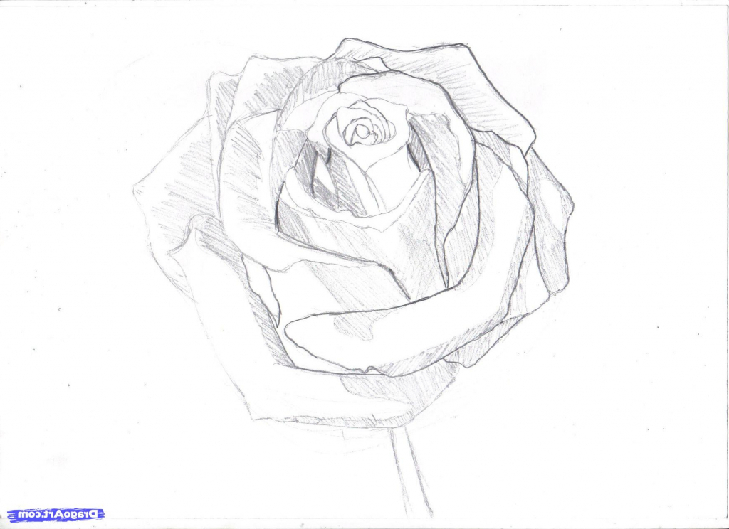 1024x744 Realistic Pencil Drawings Step By Step How To Draw A Rose