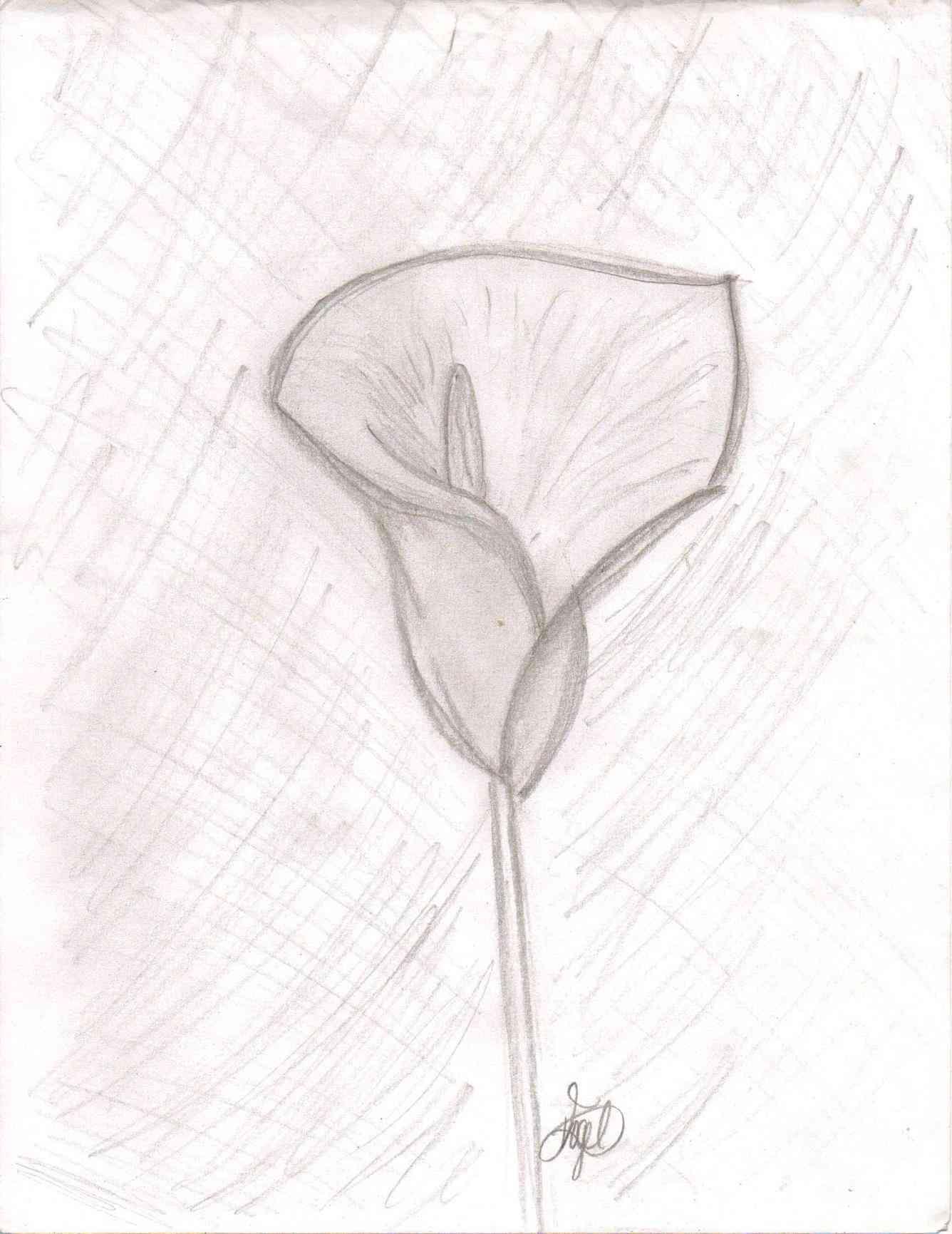 1336x1731 Simple Rose Drawings In Pencil For Kids Freespywarefixescom